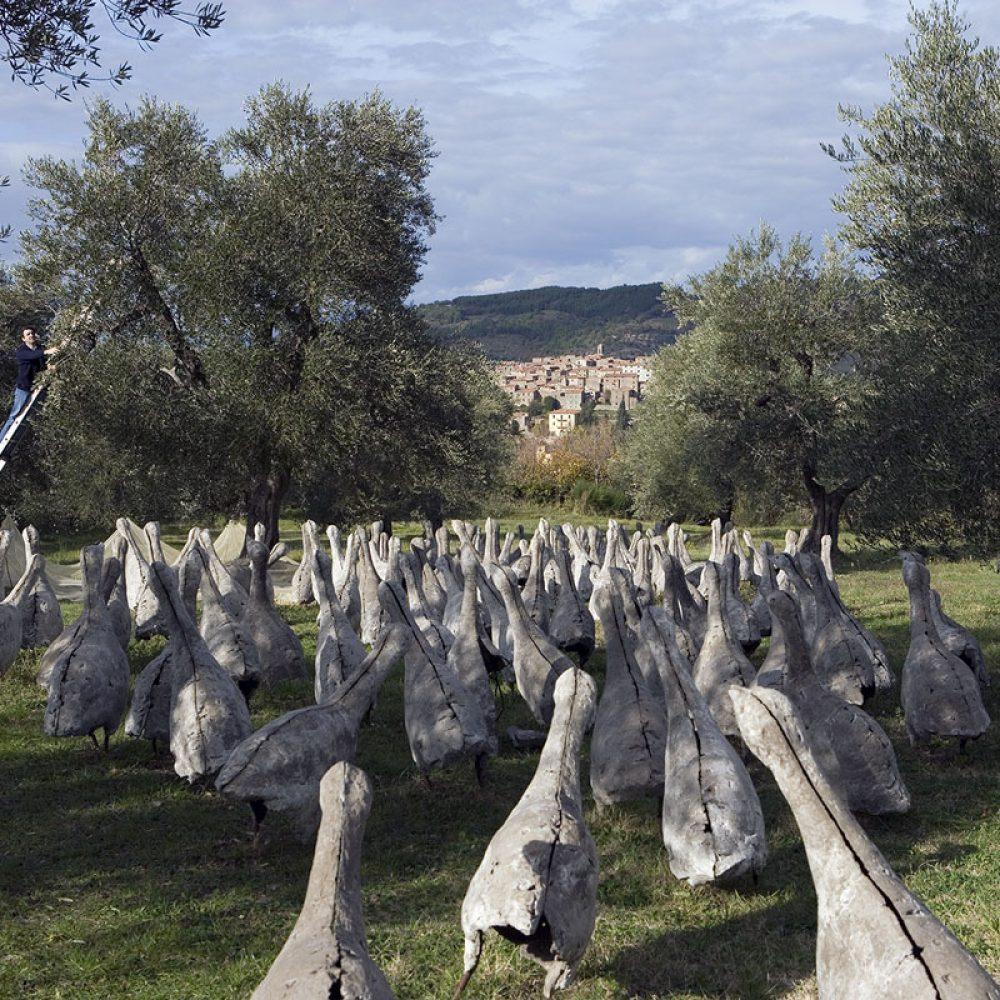 Monte_Amiata_Seggiano_DOP_Olivastra_Spoerri_Consorzio
