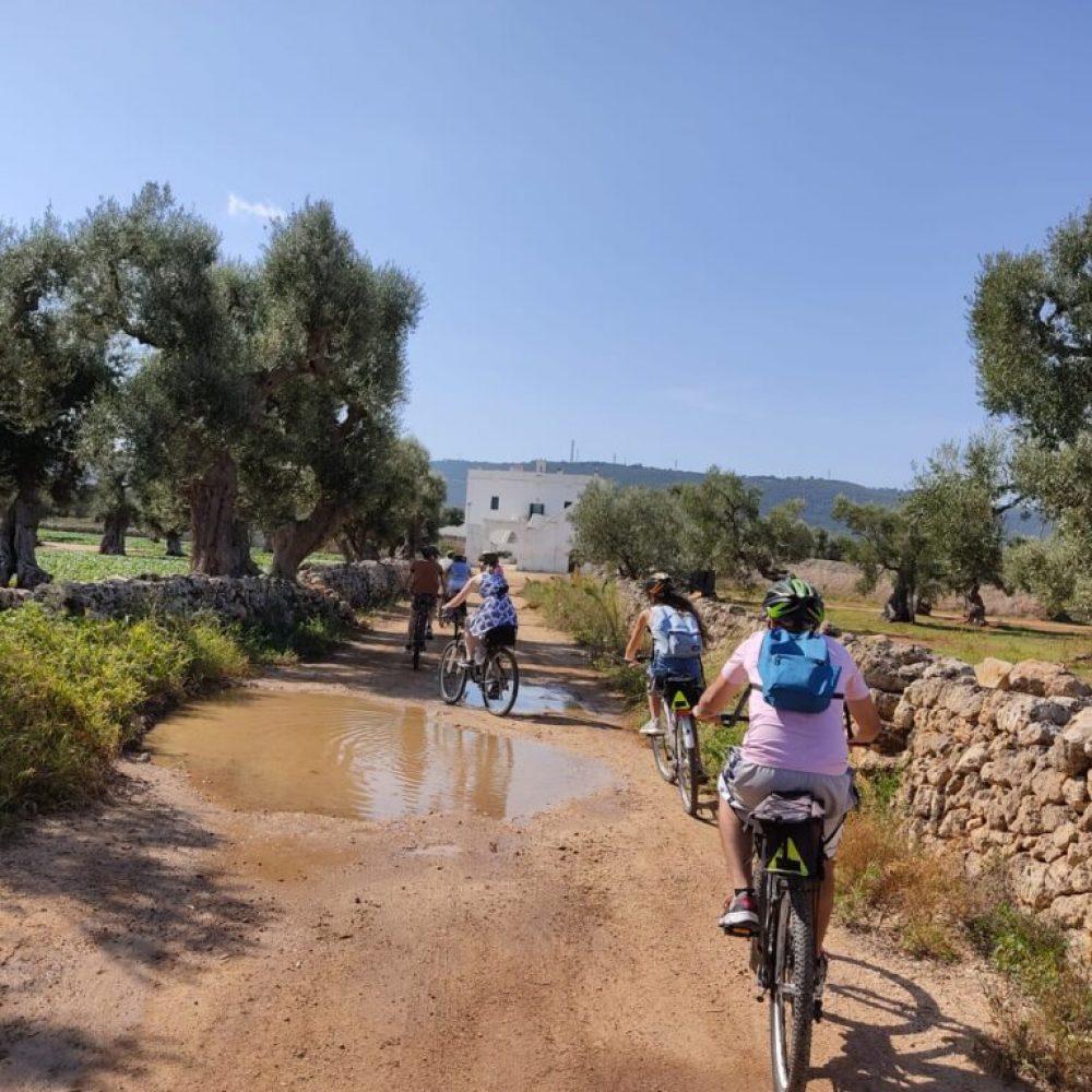 bike-tour-tra-ulivi-millenari-1024x768