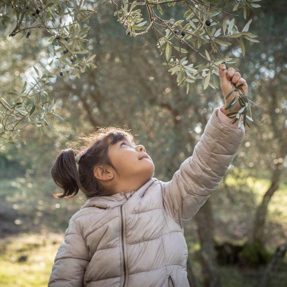 bimba-raccoglie-olive