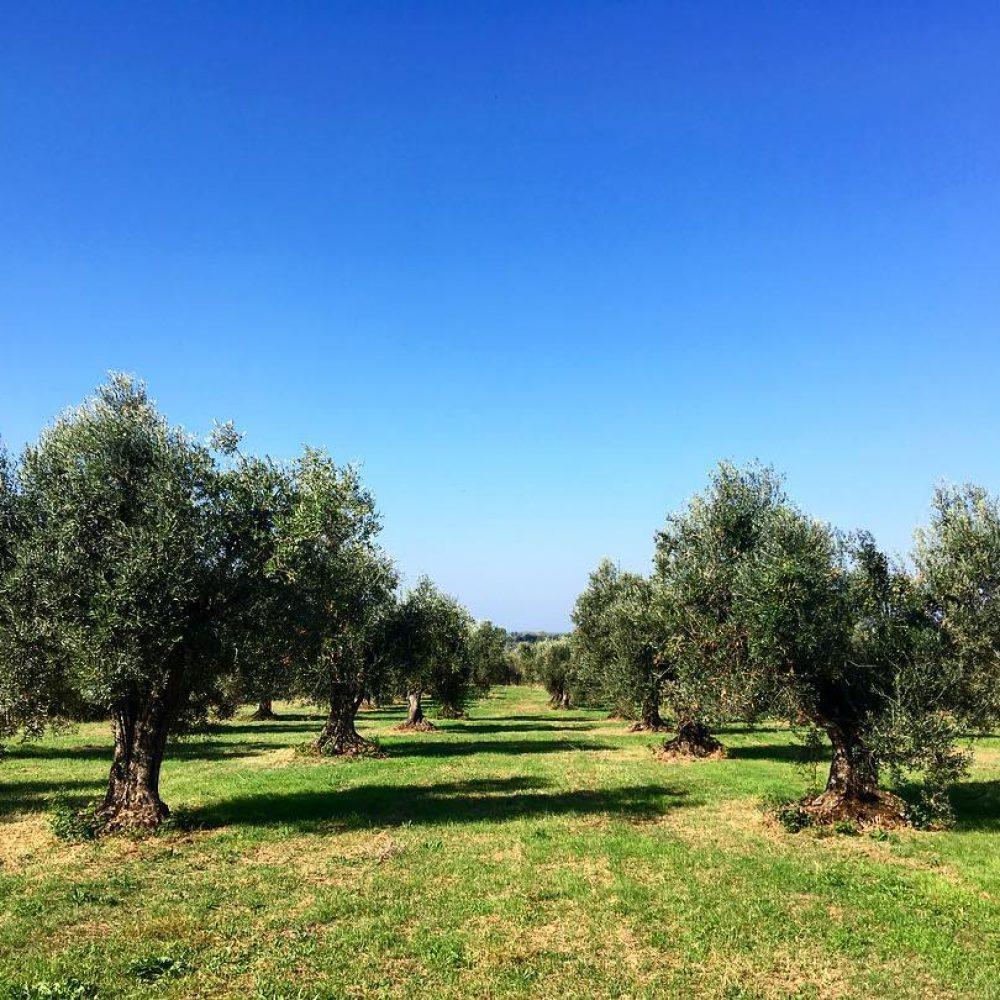 casetta-oliveta