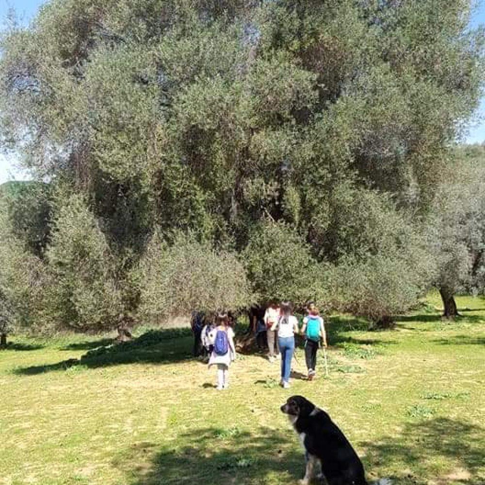 foto-olivone-cane