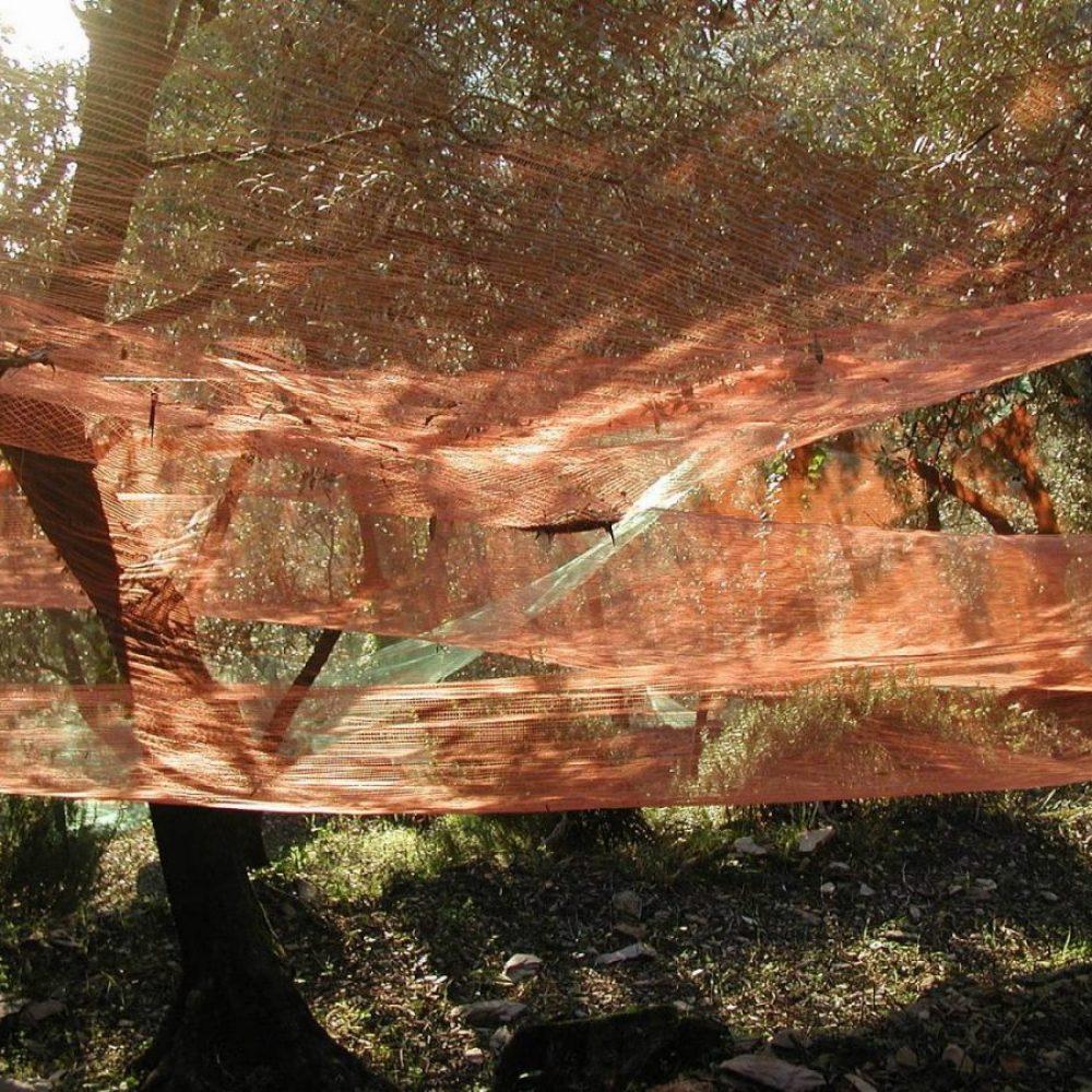 olive-tree-nets-Liguria
