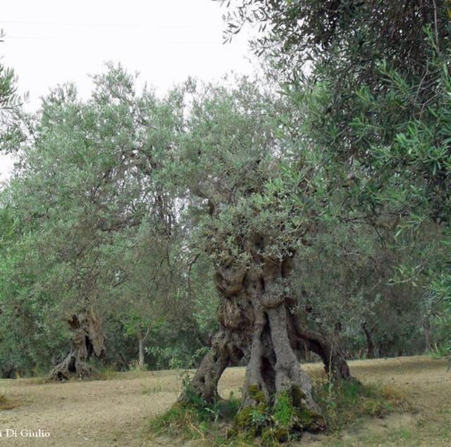 Trekking fra gli olivi