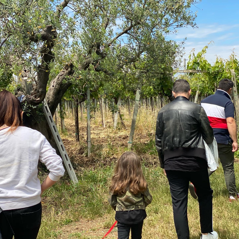 Momenti esperienziali e sensoriali dell'olivicoltura e degli oli extravergini