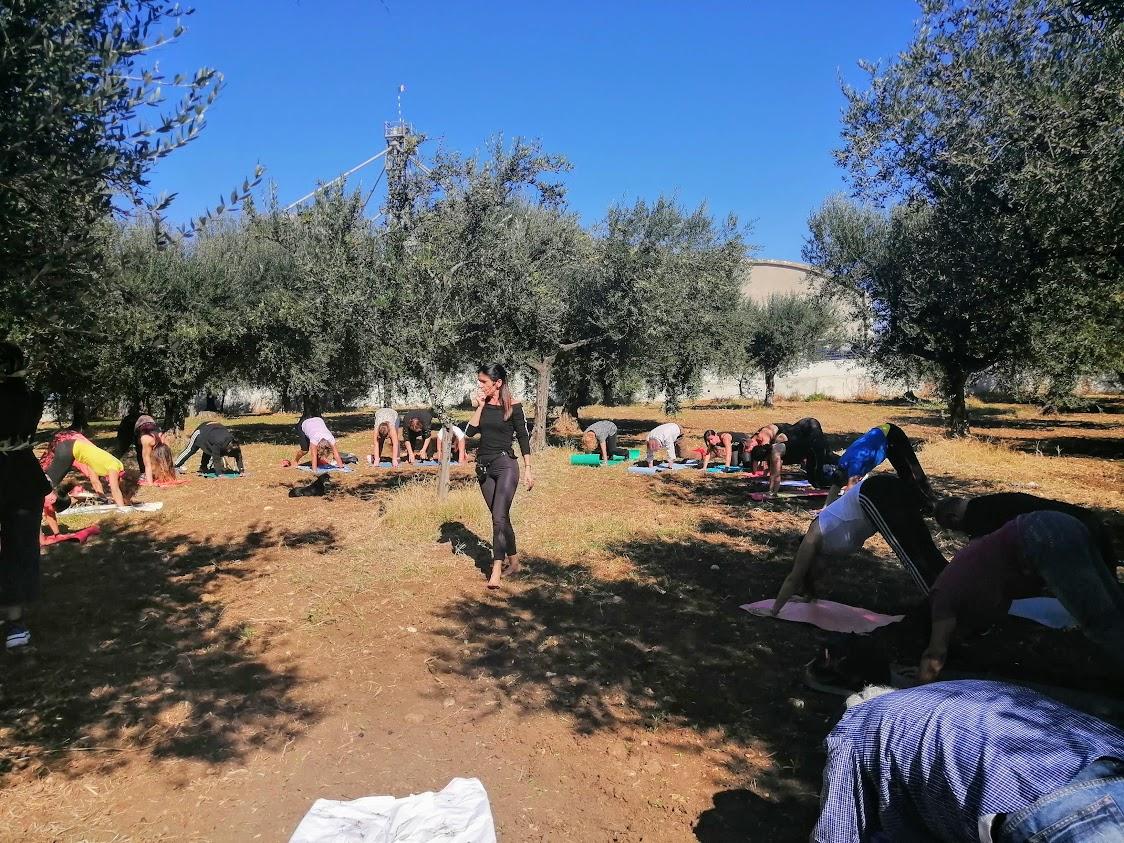 Serracapriola tra gli olivi