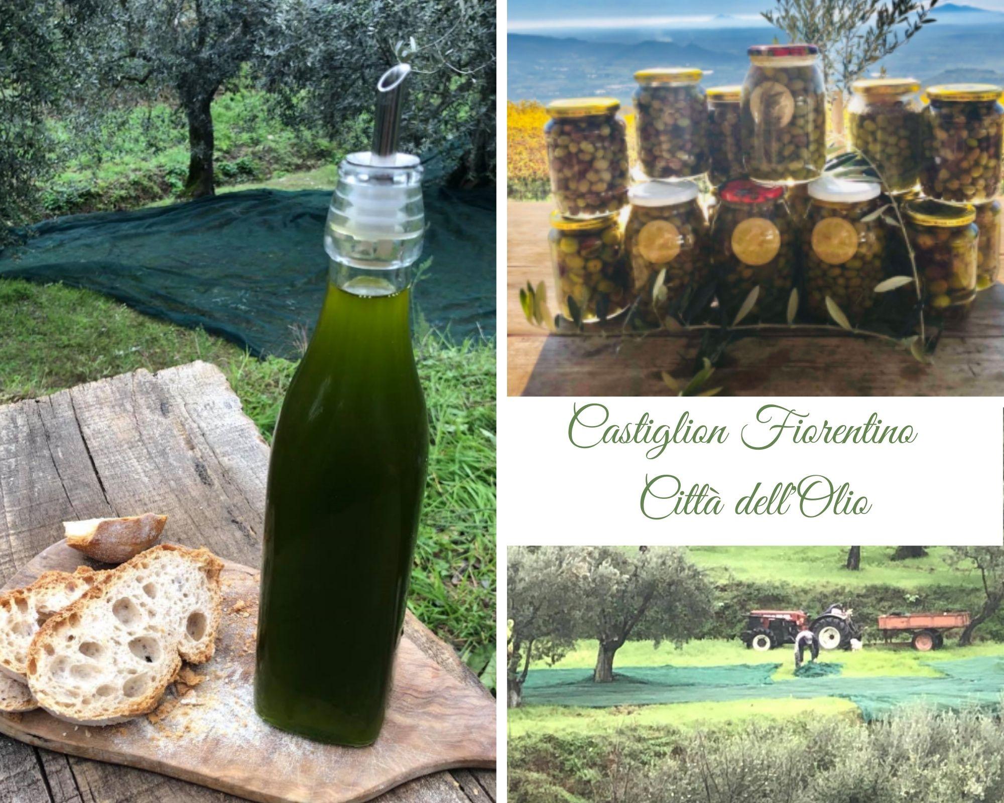 L'olio di oliva a Castiglion Fiorentino: fra tradizione e innovazione