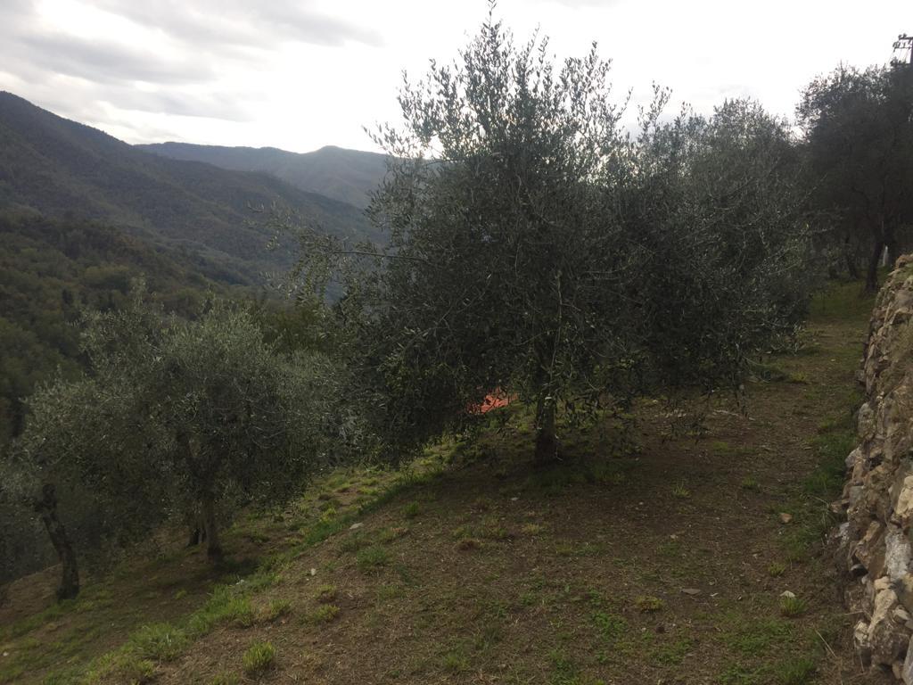 Azienda Agricola Garibaldi Raffaele