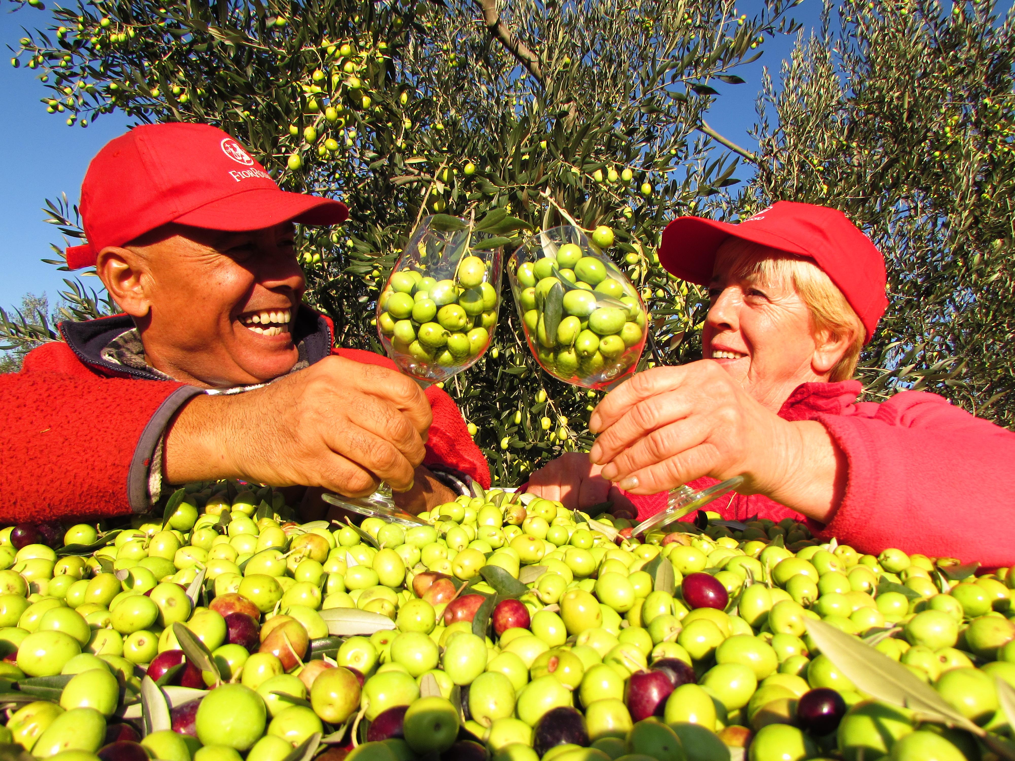 Visita nell'oliveto con assaggio olio extravergine di oliva e didattica