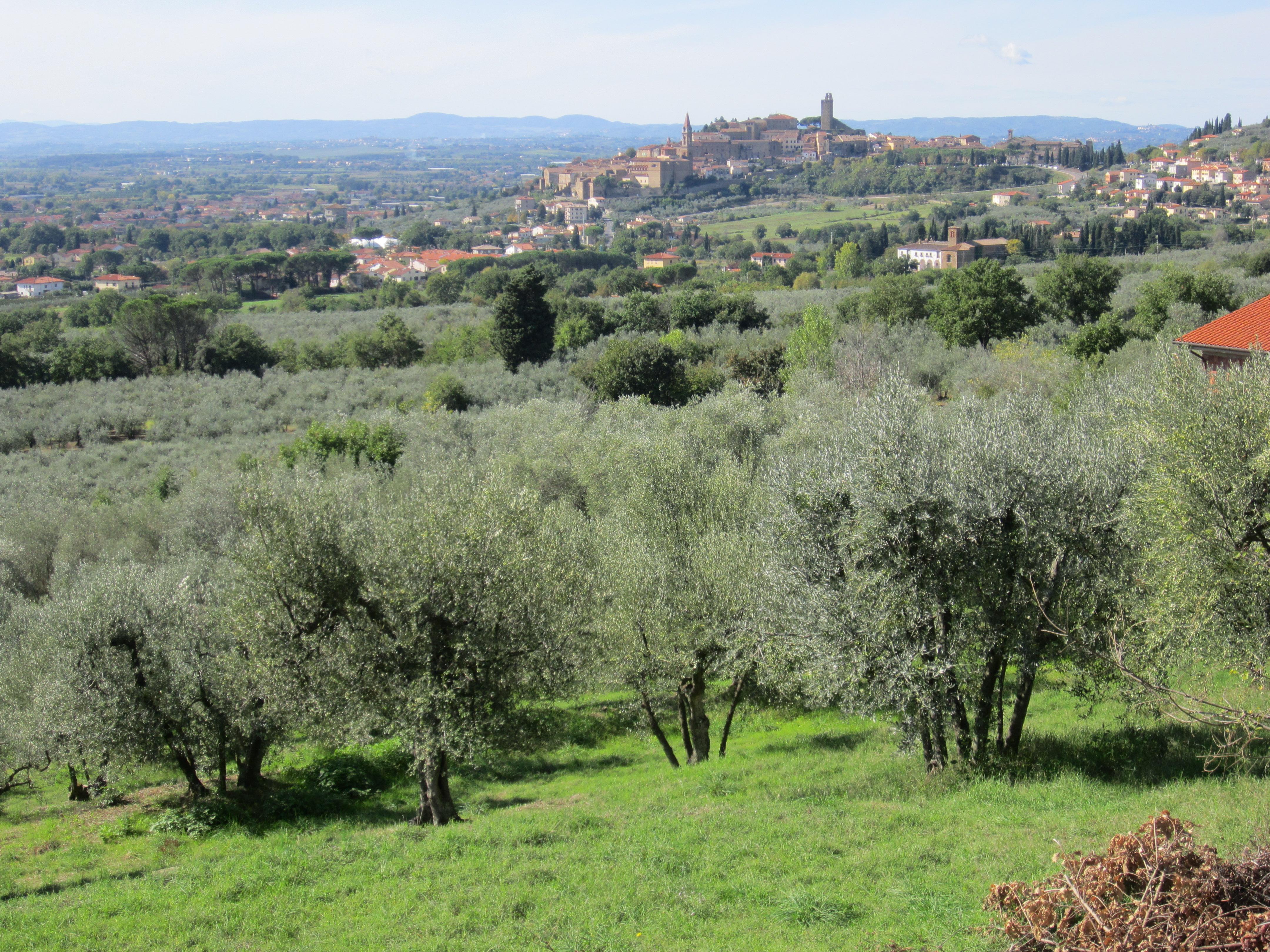Castiglion Fiorentino a tavola con l'olio extravergine di oliva