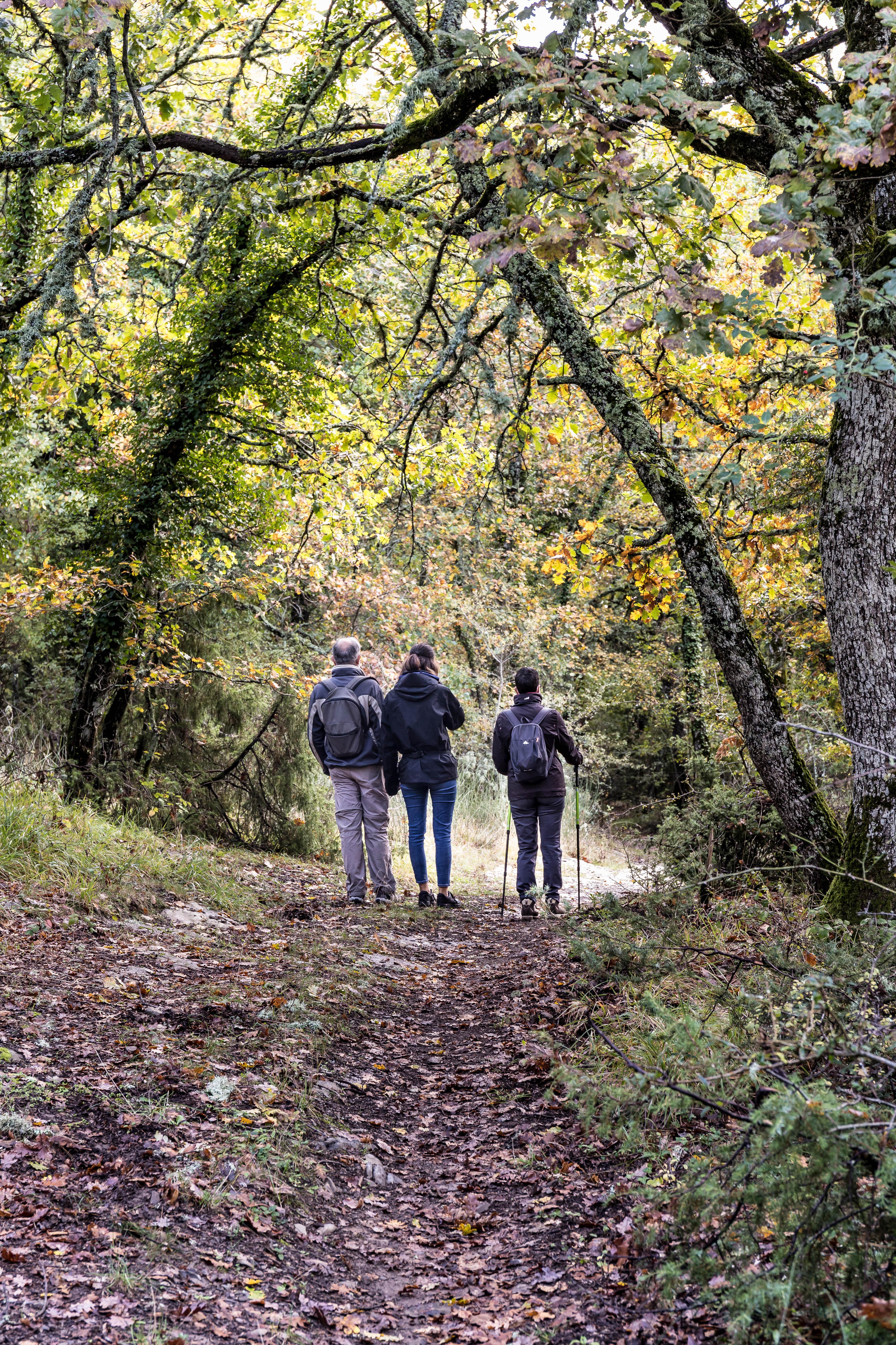 Lungo i sentieri dell'Extravergine/Along The Evo Trails
