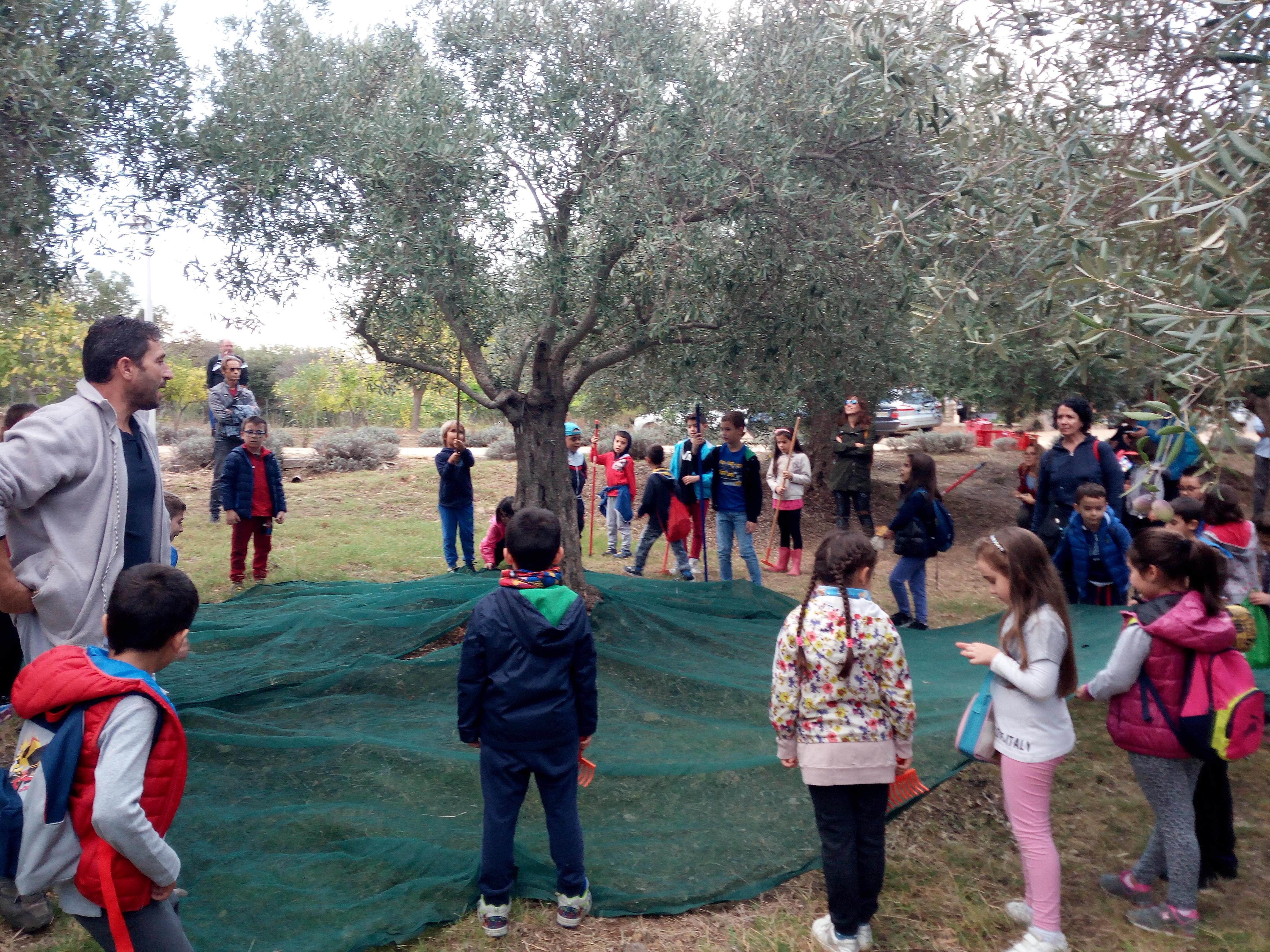 Visita didattica presso l'azienda olivicola e frantoio TALLORU
