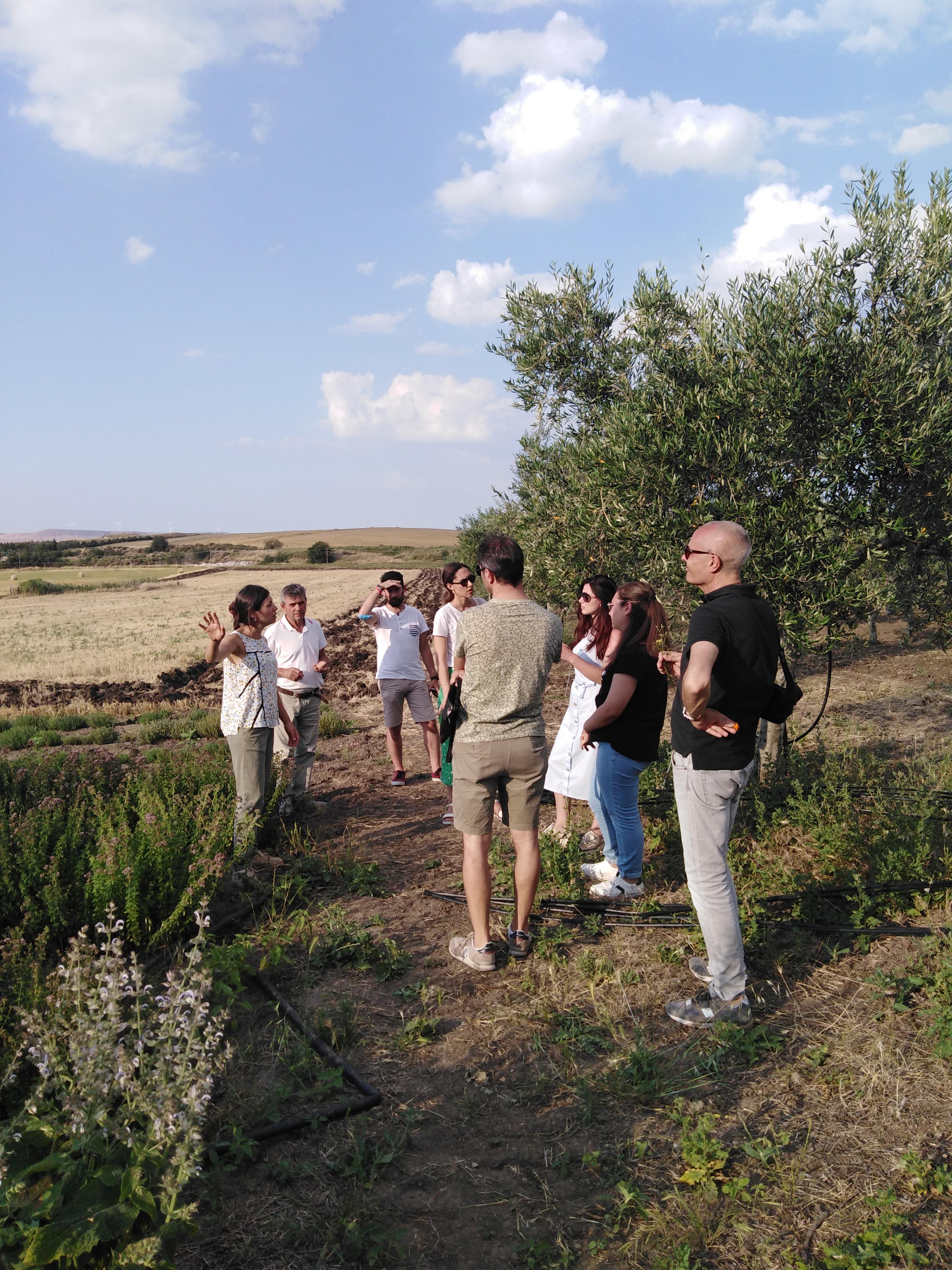 Olio del Vulture: tradizione e innovazione dal campo alla tavola