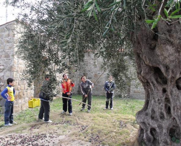 """Itinerario Storico Naturalistico Ulivi Monumentali """"Sulle Tracce dei Gattopardi"""""""