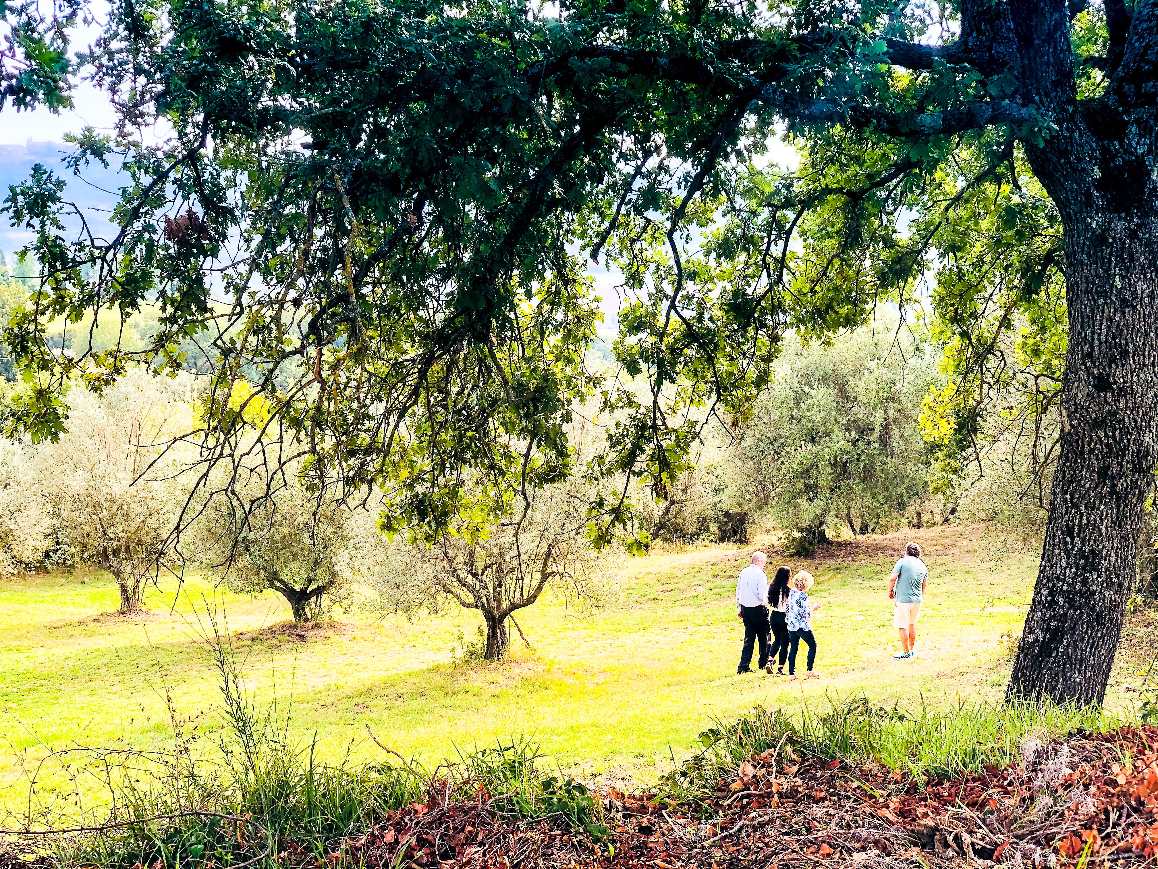 Pranzo tradizionale tra gli olivi