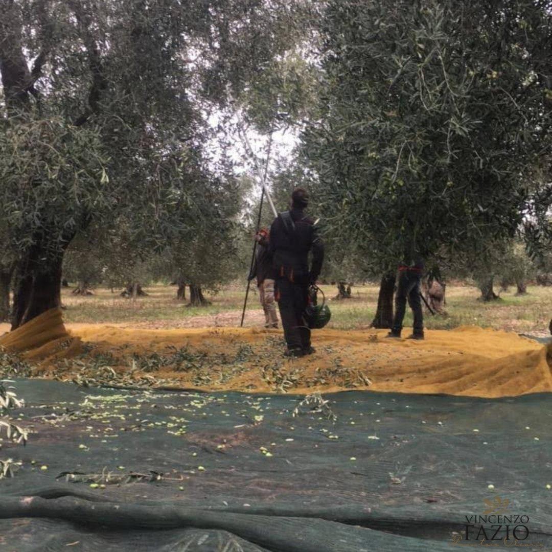 Passeggiata tra gli ulivi