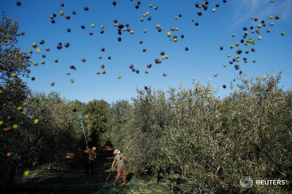 Raccolta delle Olive e non solo … all'insegna di Tradizioni, Relax e Natura